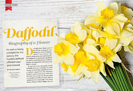 Daffodil: Biography of a Flower