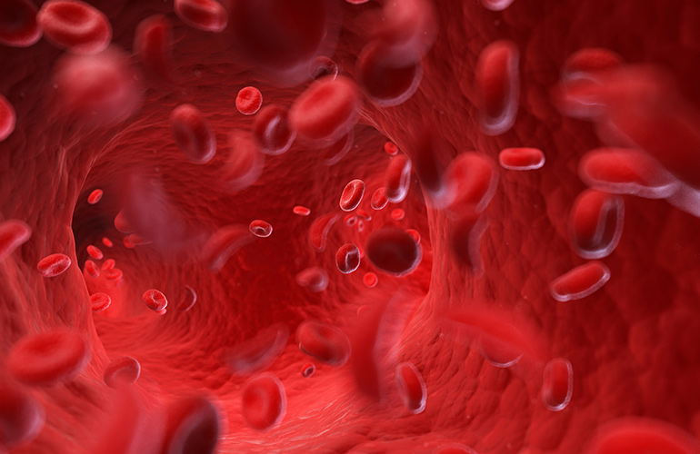 Blood will circulate through your vascular system 3 times