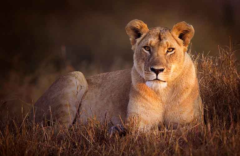 Elsa the lioness inspired wildlife conservation