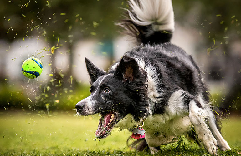 Pickles the collie thwarted a robbery