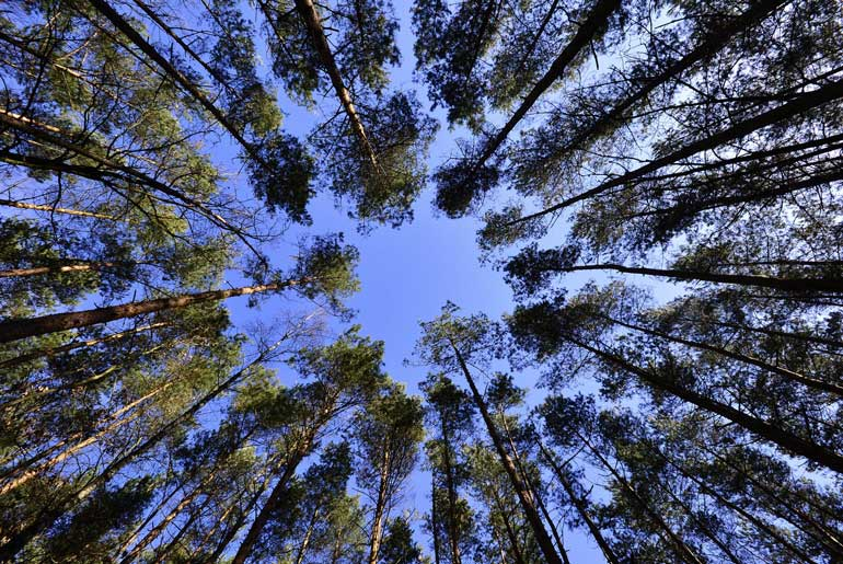 There are more trees on Earth than stars in the galaxy