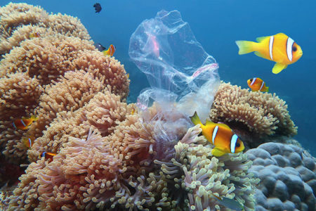 11 crazy ideas that just might save our oceans