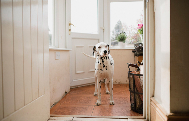 Your dog wants to go outside without you