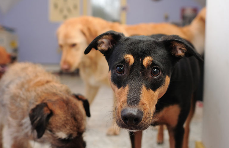 Adopting from a shelter is often more cost-effective than a 'free' kitten or puppy