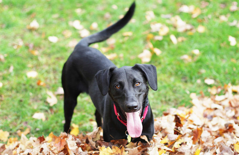 Tail wagging has its own language