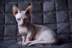 31 ugly cats that are still super cute